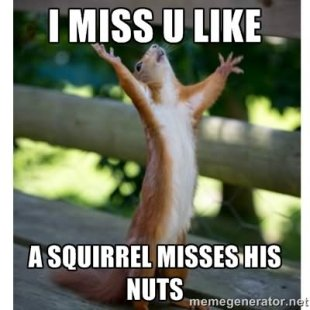 I-Miss-U-Like-A-Squirrel-Misses-His-Nuts-Funny-Meme-Image.jpg