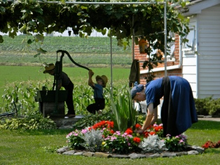 Amish-life